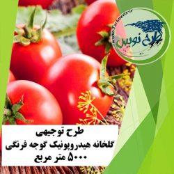 طرح توجیهی گلخانه هیدروپونیک گوجه فرنگی 5000 مترمربع