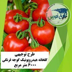 طرح توجیهی گلخانه هیدروپونیک گوجه فرنگی 6000 متر مربع