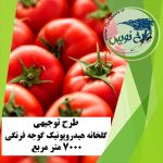 طرح توجیهی گلخانه هیدروپونیک گوجه فرنگی ۷۰۰۰ متر مربع