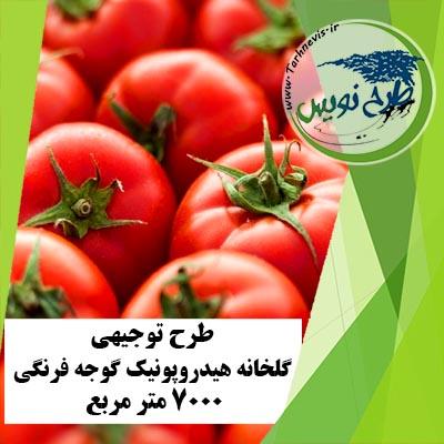 طرح توجیهی گلخانه هیدروپونیک گوجه فرنگی 7000 متر مربع
