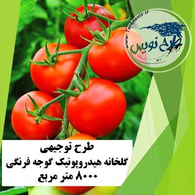 طرح توجیهی گلخانه هیدروپونیک گوجه فرنگی 8000 متر مربع