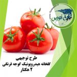 طرح توجیهی گلخانه هیدروپونیک گوجه فرنگی ۲ هکتار