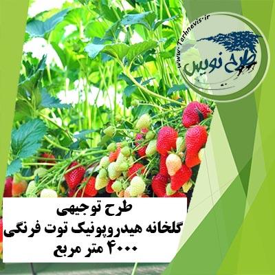طرح توجیهی گلخانه هیدروپونیک توت فرنگی 4000 متر مربع