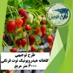 طرح توجیهی گلخانه هیدروپونیک توت فرنگی ۶۰۰۰ متر مربع