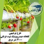طرح توجیهی گلخانه هیدروپونیک توت فرنگی ۷۰۰۰ متر مربع