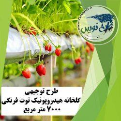 طرح توجیهی گلخانه هیدروپونیک توت فرنگی 7000 متر مربع