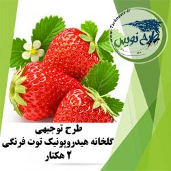 طرح توجیهی گلخانه هیدروپونیک توت فرنگی 2 هکتار