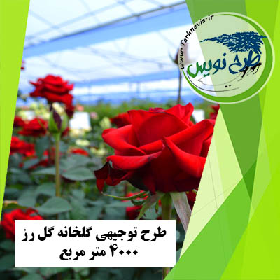 طرح توجیهی گلخانه گل رز 4000 متر مربع