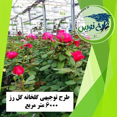 طرح توجیهی گلخانه گل رز 6000 متر مربع