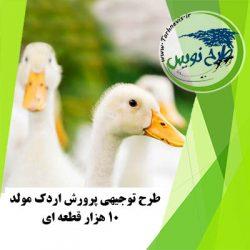 طرح توجیهی پرورش اردک مولد 10000 قطعه ای