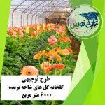 طرح توجیهی گلخانه گل شاخه بریده ۶۰۰۰ مترمربع