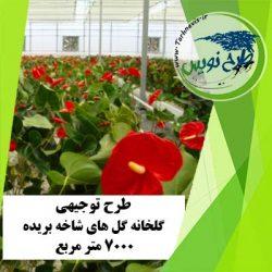 طرح توجیهی گلخانه گل های شاخه بریده 7000 مترمربع
