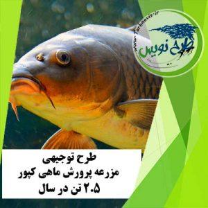 طرح توجیهی پرورش ماهی کپور 2.5 تن