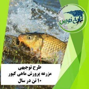 طرح توجیهی پرورش ماهی کپور 10 تن