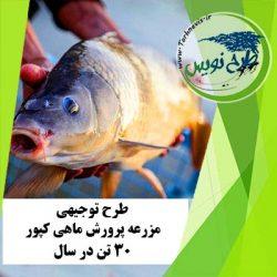 طرح توجیهی پرورش ماهی کپور 30 تن