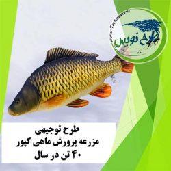طرح توجیهی پرورش ماهی کپور 40 تن