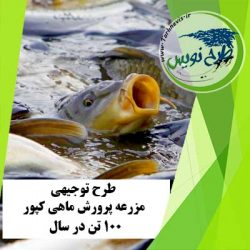 طرح توجیهی پرورش ماهی کپور 100 تن