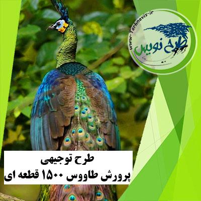 طرح توجیهی پرورش طاووس 1500 قطعه