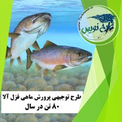 طرح توجیهی پرورش ماهی قزا آلا 80 تن