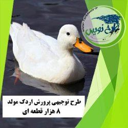 طرح توجیهی پرورش اردک مولد 8000 قطعه