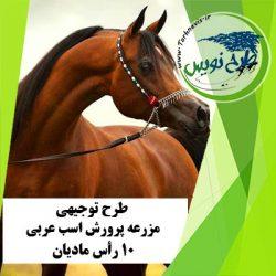 طرح توجیهی پرورش اسب عربی 10 رأس