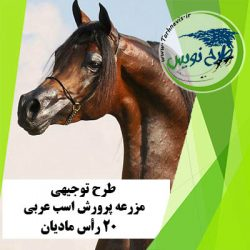 طرح توجیهی پرورش اسب عربی 20 رأس