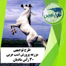 طرح توجیهی پرورش اسب عربی 30 رأس