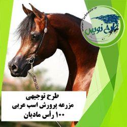 طرح توجیهی پرورش اسب عربی 100 رأس