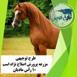 طرح توجیهی اصلاح نژاد اسب 10 رأس