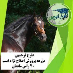 طرح توجیهی اصلاح نژاد اسب 20 رأس