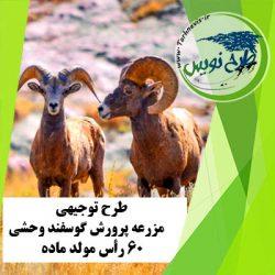 طرح توجیهی پرورش گوسفند وحشی 60 رأس