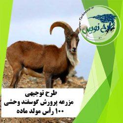 طرح توجیهی پرورش گوسفند وحشی 100 رأس