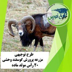 طرح توجیهی پرورش گوسفند وحشی 20 رأس