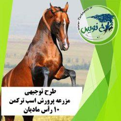 طرح توجیهی پرورش اسب ترکمن 10 رأس
