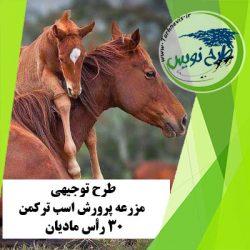 طرح توجیهی پرورش اسب ترکمن 30 رأس