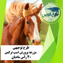 طرح توجیهی پرورش اسب ترکمن 40 رأس