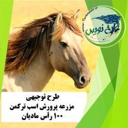 طرح توجیهی پرورش اسب ترکمن 100 رأس