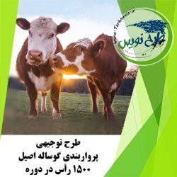 طرح توجیهی پرواربندی گوساله اصیل 1500 رأس